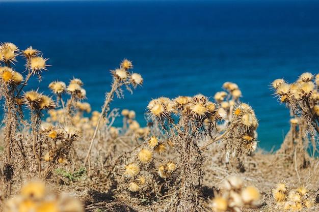 해변 옆에 스파이크가있는 노란색 건조 식물의 선택적 초점 샷