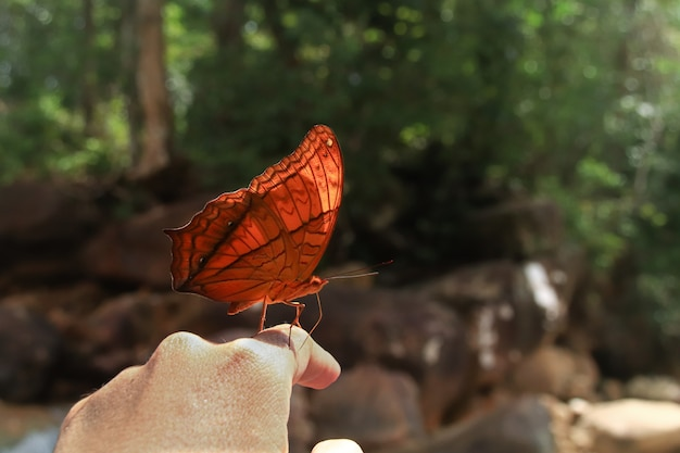 Selective focus shot of an orange butterfly on a finger