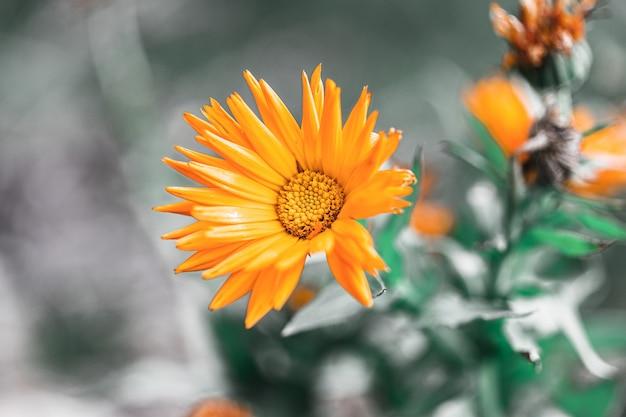 Selective focus shot of an orange flower in the garden