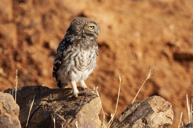 Selective focus shot of an owl standing on top of the rocks under the sunlight