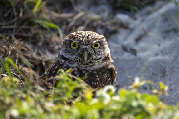Selective focus shot of an owl