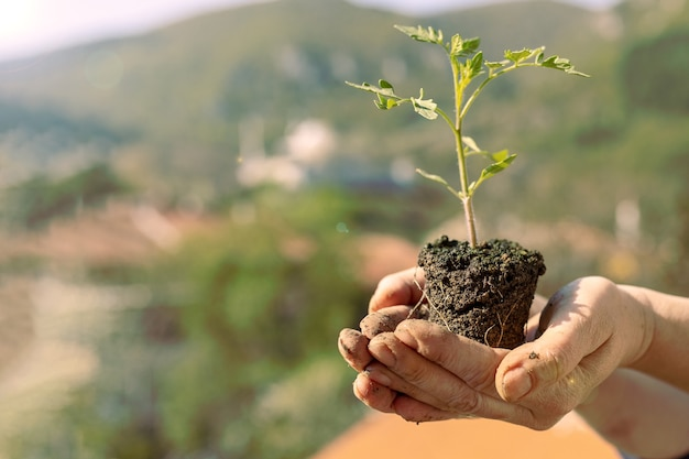 Selective focus shot of a person holding a tree seedling