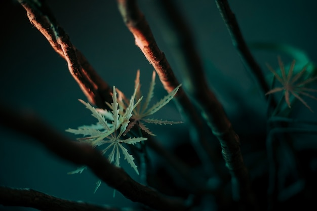 Selective focus shot of plants growing on a branch