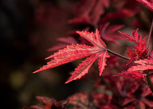 Selective focus shot of red autumn leaves