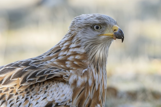 Selective focus shot of a red kite