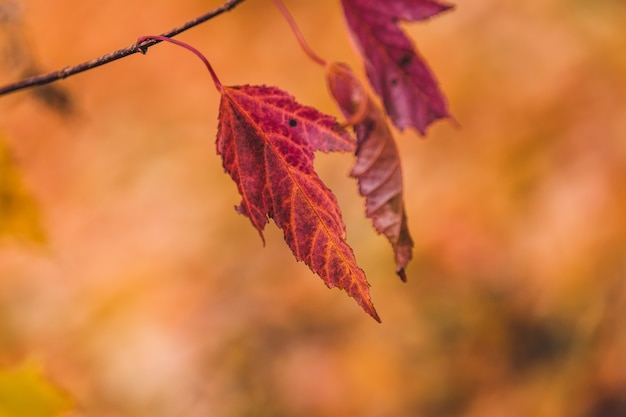 Selective focus shot of red leaves on a branch