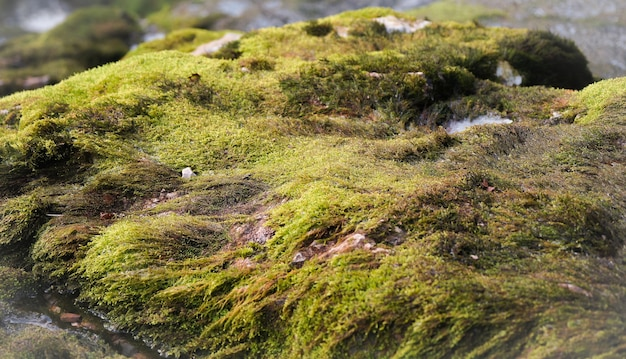 Selective focus shot of a rock covered with green moss