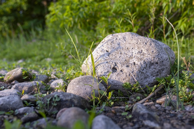 Selective focus shot of rocks with bushy background