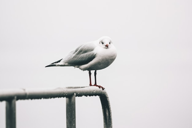 Selective focus shot of a seagull sitting on the wet handrailings by a lake