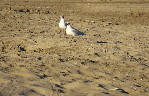 Colpo di messa a fuoco selettiva di gabbiani sulla spiaggia