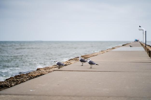 Messa a fuoco selettiva colpo di gabbiani sulla passerella accanto a una spiaggia