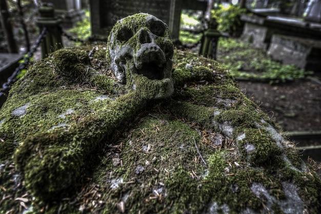 Colpo di messa a fuoco selettiva di un teschio in un cimitero