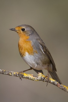 Selective focus shot of a small brown bird with orange chest sitting on a tree branch