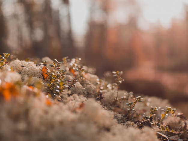 Selective focus shot of small plants growing on the mossy stones with blurred