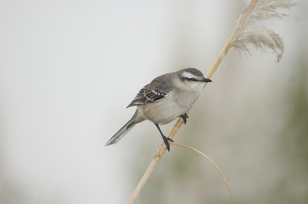 Selective focus shot of a small sparrow sitting on a stick