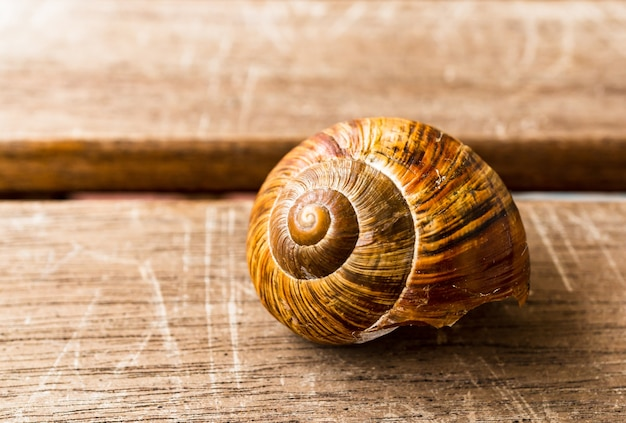 Selective focus shot of a snail on a wooden surface