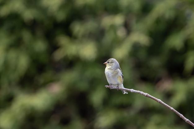 Selective focus shot of a sparrow perched o a branch