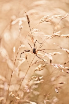 Selective focus shot of a spider on a wheat