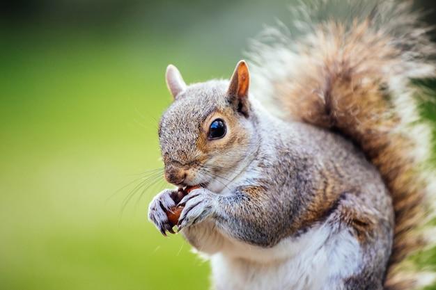 Colpo di messa a fuoco selettiva di uno scoiattolo nel cortile