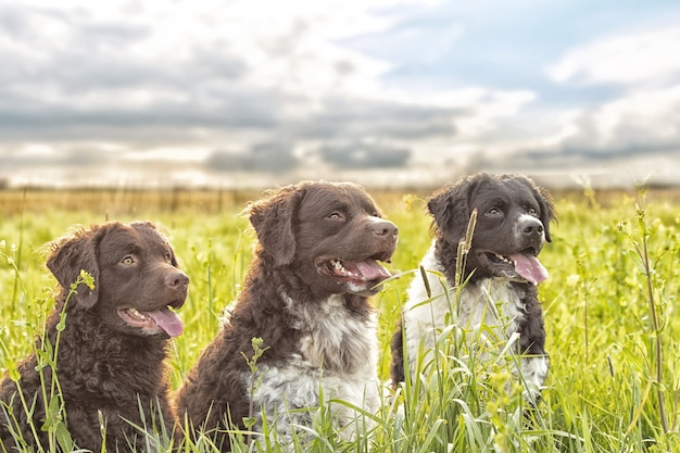 Selective focus shot of three adorable dogs