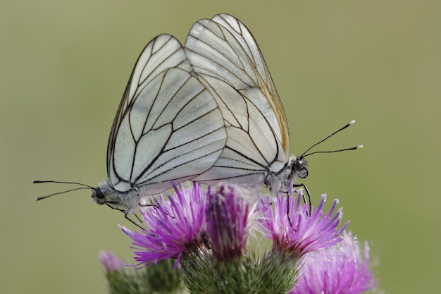 Selective focus shot of two beautiful butterflies sitting on an exotic pink flower