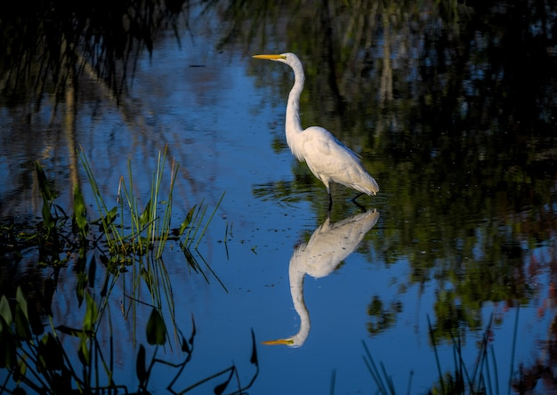 Selective focus shot of water reflecting the egret