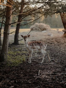 Selective focus shot of a white-tailed deer in a farmland