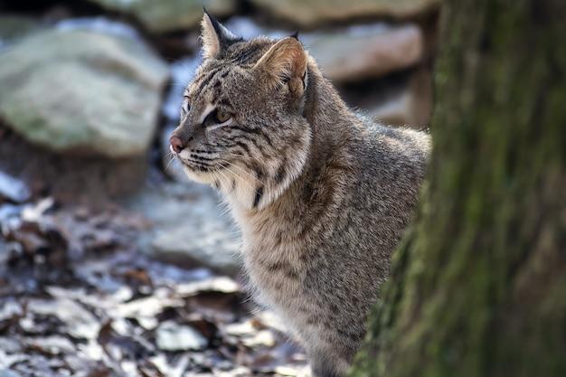 Colpo di messa a fuoco selettiva di un gatto selvatico seduto