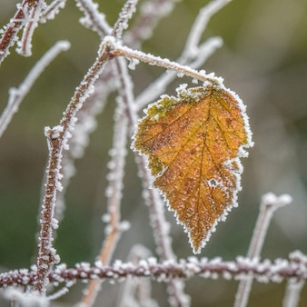 Selective focus shot of a yellow autumn leaf on a branch covered with frost