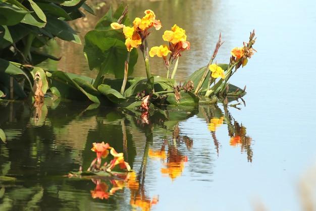 Colpo di messa a fuoco selettiva di un fiore giallo sul lago