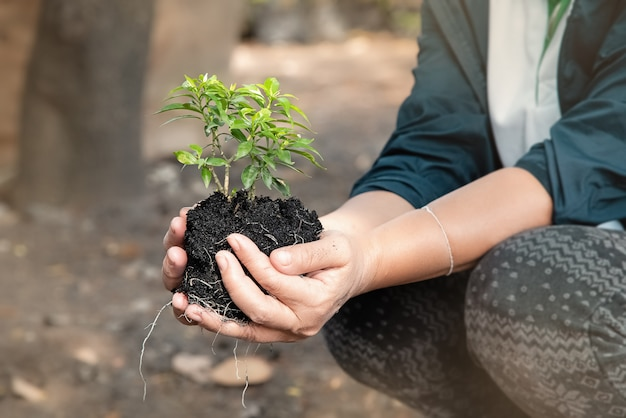 In selective focus of small tree and black soil in human hand,blurry light around,the environment concept