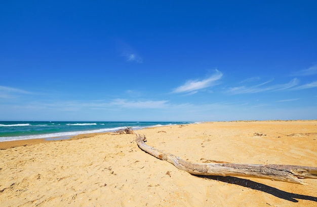 Selective focus on wooden log lying on the sand. sandy wild beach, blue sea with clouds and blue sky on the coast. beautiful ocean outdoor nature landscape,