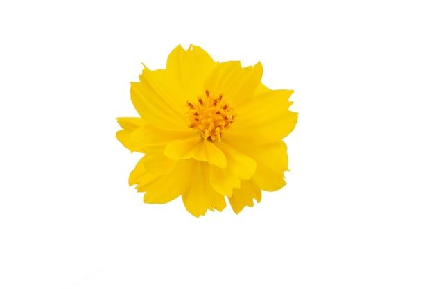 セレクティブフォーカス白い背景に分離された黄色い花。ファイルにはクリッピングパスが含まれているので作業が簡単です。