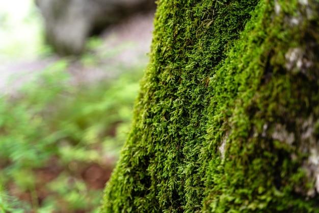 낮에 슬로베니아 트리글라브 공원에 있는 이끼 낀 나무의 선택적 샷