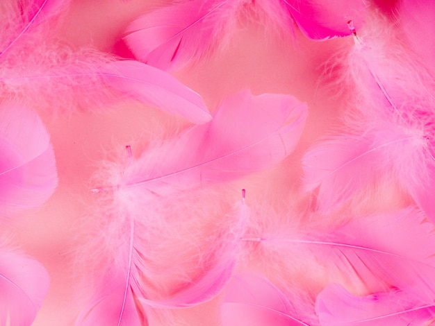 Selective soft focus close up pink feathers texture background in pastel color