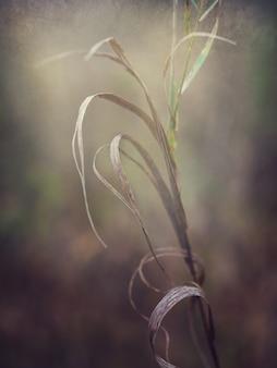 乾いた草の選択的なソフトフォーカス