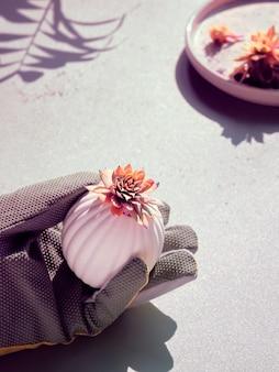 白い石の背景に手袋をはめた手でsempervivum多肉植物、影と強い光、トーンのイメージ