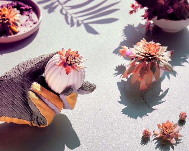 白い石のテーブルに手袋をはめた手でsempervivum多肉植物、影と強い光、トーンのイメージ