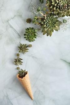 Суккуленты sempervivum в рожке вафельного мороженого. творческая плоская планировка, вид сверху
