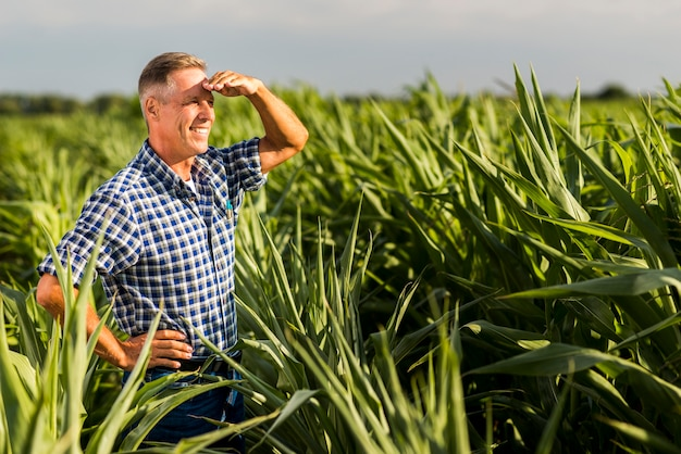 Senior agronomist looking away in a cornfield