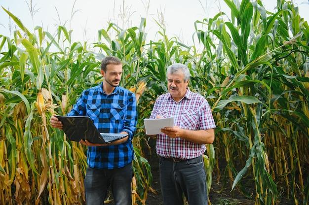 태블릿을 들고 옥수수 밭에 서 있는 노인과 젊은 농부는 바라보고 가리키며 일몰에 회사를 조사하고 있습니다