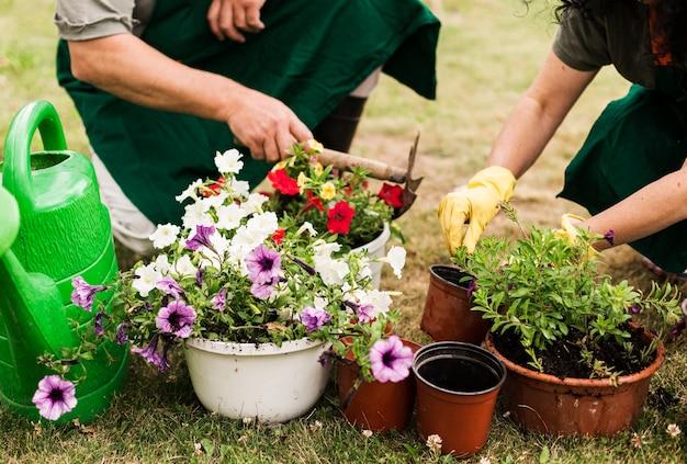 수석 부부는 꽃을 돌보는