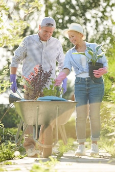 Senior couple gardening in sunlight