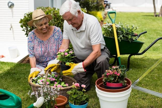 Senior couple gardening together in backyard
