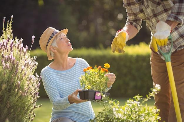 Пожилая пара занимается садоводством вместе