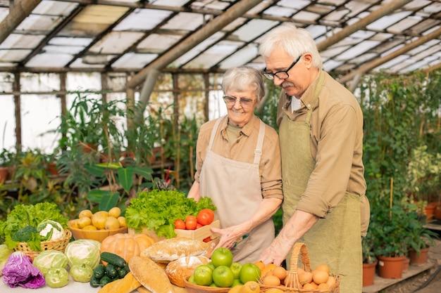エプロンとグラスの老夫婦が温室で収穫しながら野菜の箱をテーブルに置く