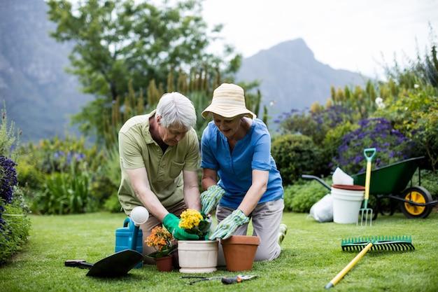 Пожилая пара сажает цветок