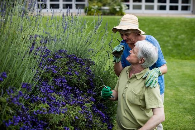 Пожилая пара пахнет лавандой