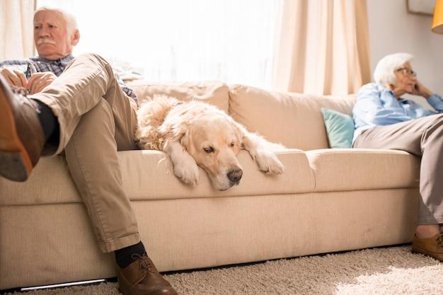 Старшая собака спит на диване