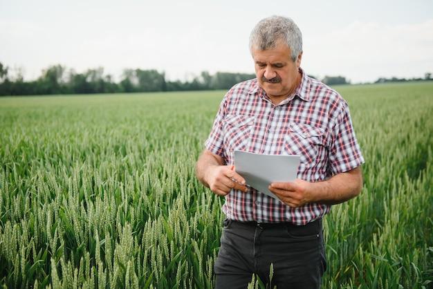 Старший фермер-агроном на пшеничном поле